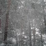 28.02.2005-f1
